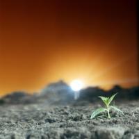 Jong plantje bij kunstlicht - Young plant in artificial light (5679580299)