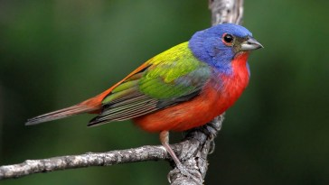 Climate change affecting migratory birds