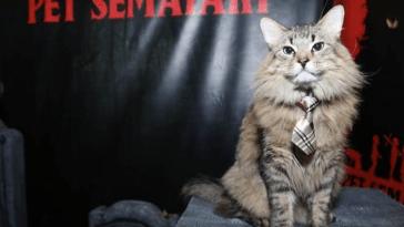 Cats in Ties at Press Junkets