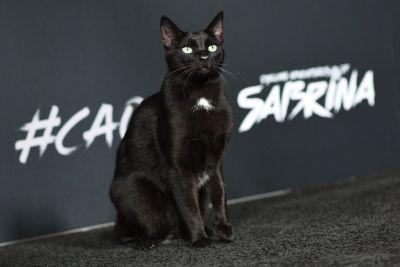 Salem the Cat
