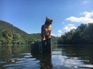 Beans is king of the canoe in his canine life vest.
