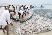 صورة الثروة السمكية قطاع رئيسي في تعزيز برامج التنوع الاقتصادي .. (تـقـريـر)..