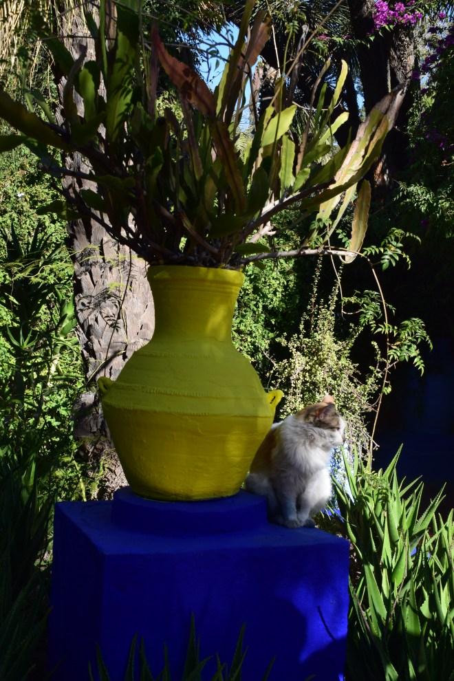 Marrakech Jardins Majorelle gatos
