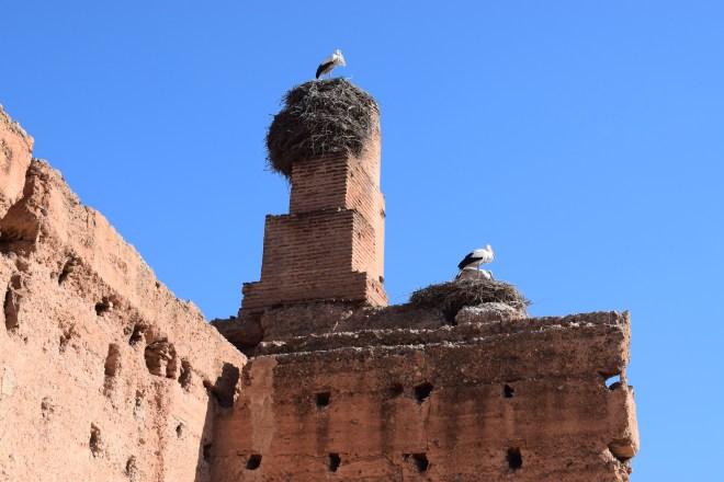 Marrakech palacio em ruinas el badi cegonhas 1