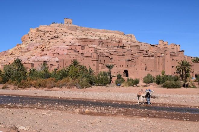 Ait Ben Haddou sul marrocos camelos