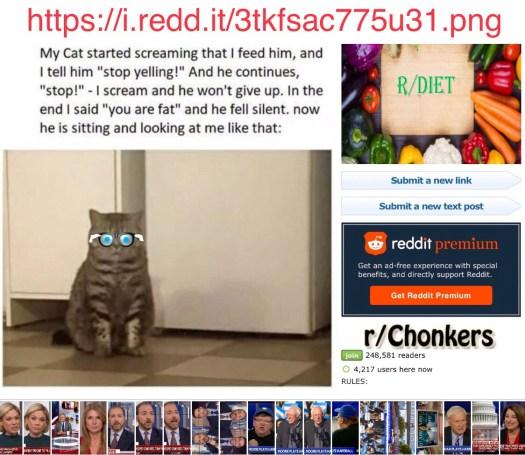 NougXT's Cat