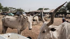 Dozens of people have died in clashes between vigilantes and cattle rustlers in Zamfara