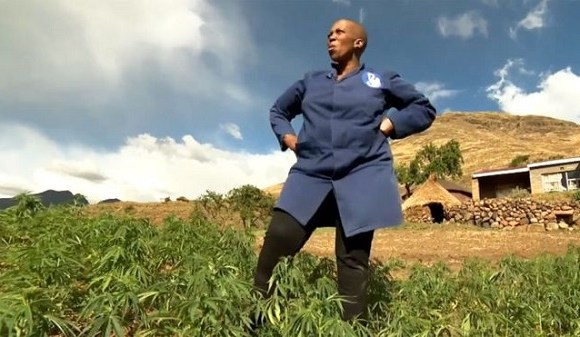 Mampho Thulo cultivates her marijuana crop without a licence