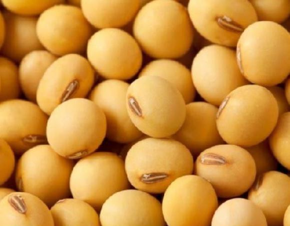 soybean exports to China reached a volume of US$14.573 billion