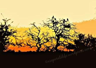 africa vulture sunset