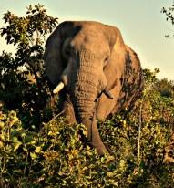 elephant picnic