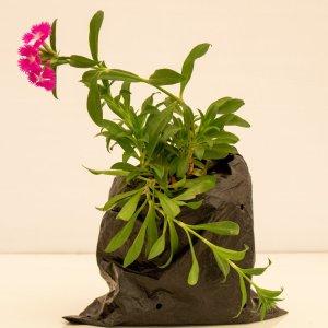Indoor and outdoor plant