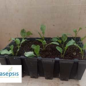 Kitchen Garden Planter at Asepsis limited stores