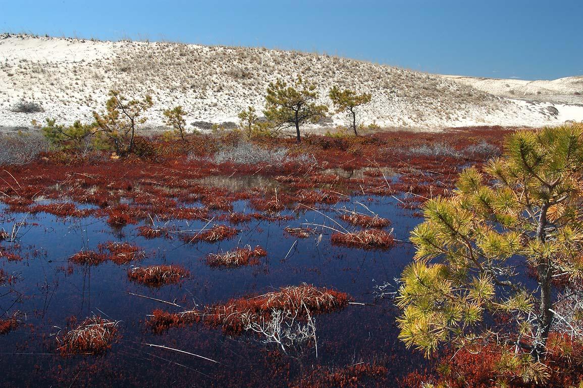 Photo 385 23 Cranberry Bog Near Snail Trail In Cape Cod