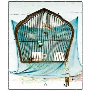 Fotografía artística-páxaro enxaulado