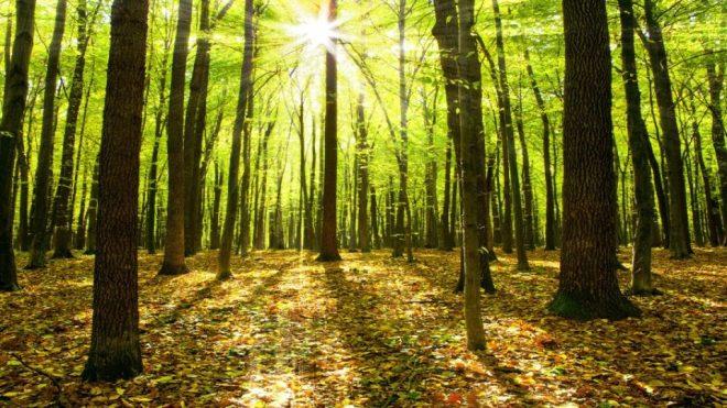 reforest4