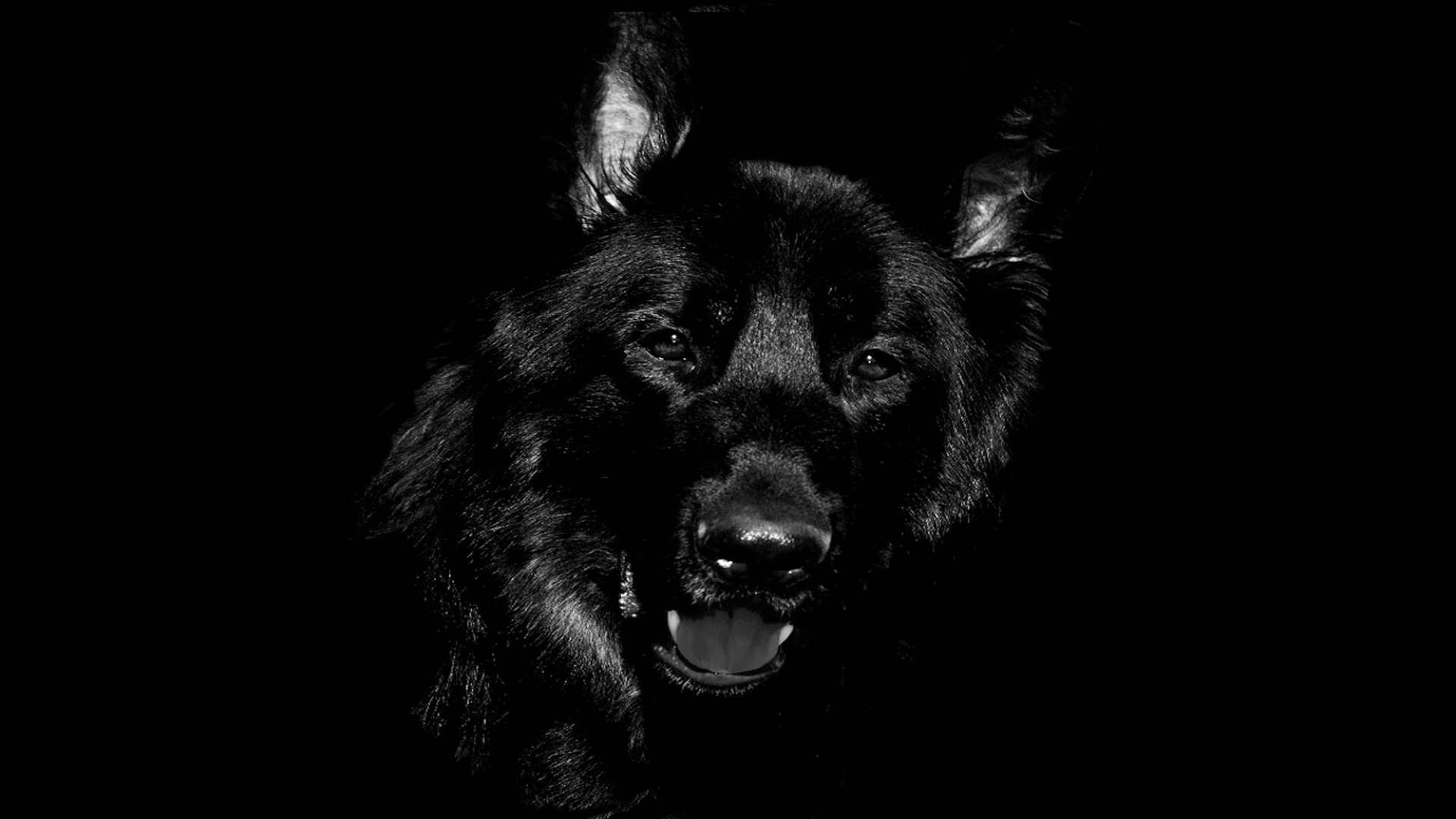 La historia del perro que anuncia la muerte 1920