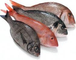 Manfaat Ikan Berminyak, dapat Mencegah dan Melawan Kanker Payudara