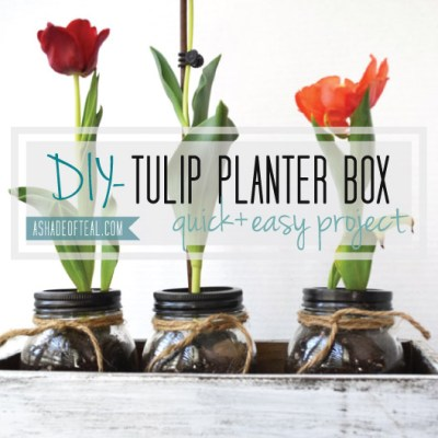 DIY- Tulip Box