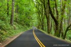 Picturesque scenery and roads like this are endless along the Columbia Gorge.