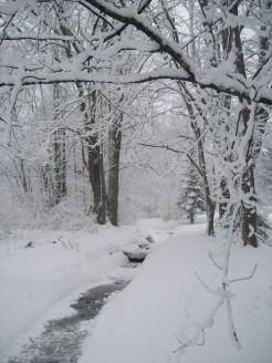 Our backyard: winter wonderland.
