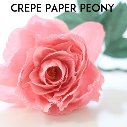 Crepe Paper Peony