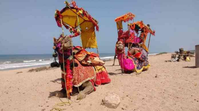 Camel Ride Madhavpur