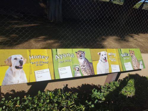 San Diego Zoo USA 3 500x375 - San Diego Zoo in 360º