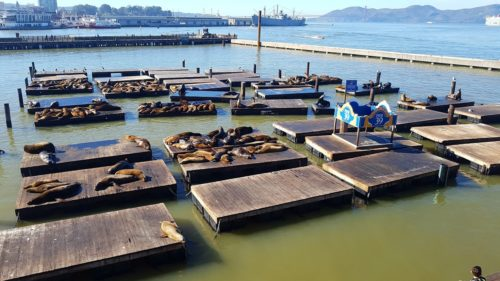Pier 39 2 500x281 - Alcatraz Island in 360º