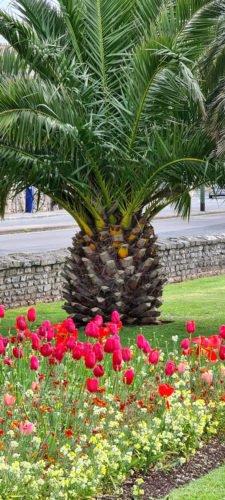 Princess Gardens Torquay 2020 4