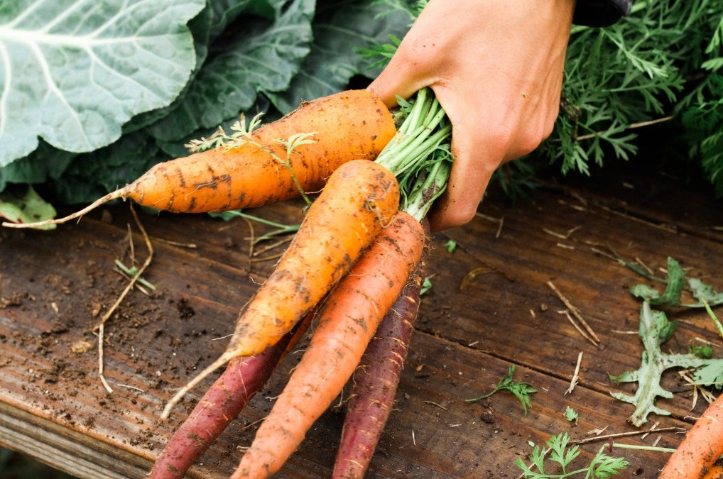 Starting a Vegetable Garden? 10 Tips for New Gardeners