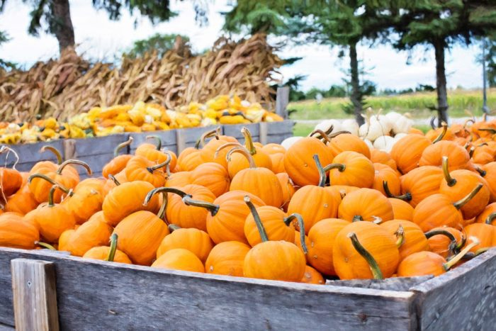 The Best Pumpkin Spice Foods and Drinks to Get You in the Mood for Fall