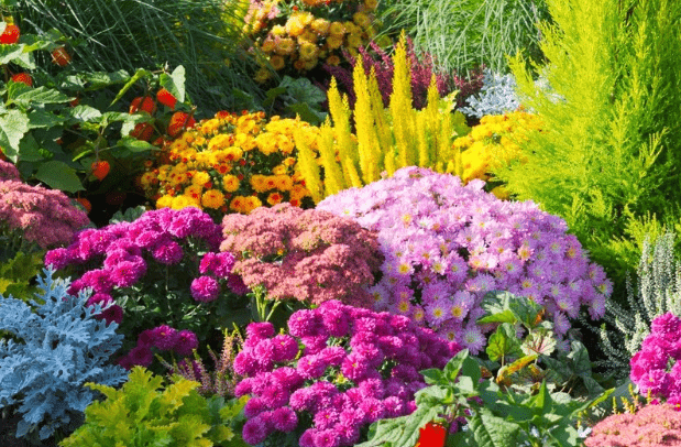 How to Get Your SoCal Garden Up and Running Despite COVID-19