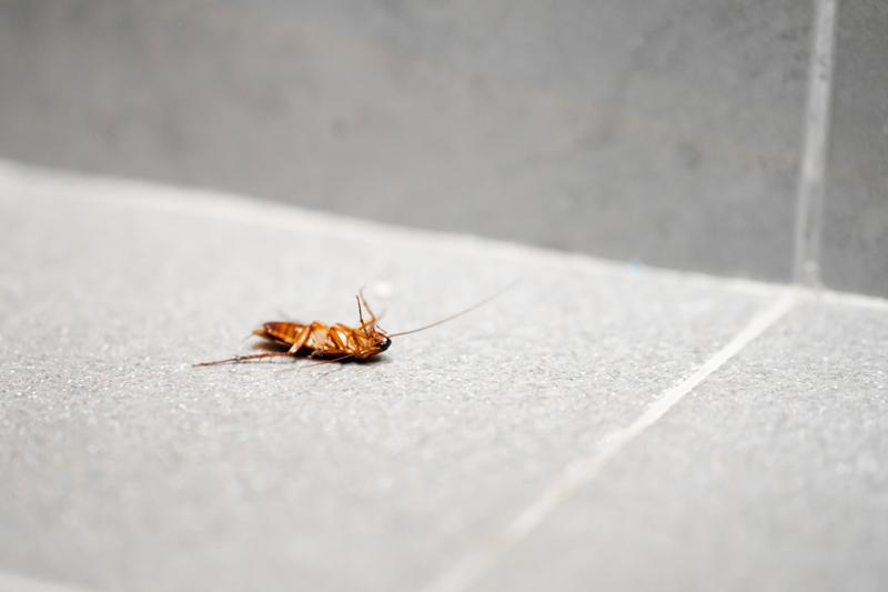 How to Stop a Pest Infestation in Your Home