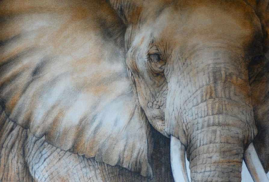 Dominique Salm Tusker - Ashcroft Art