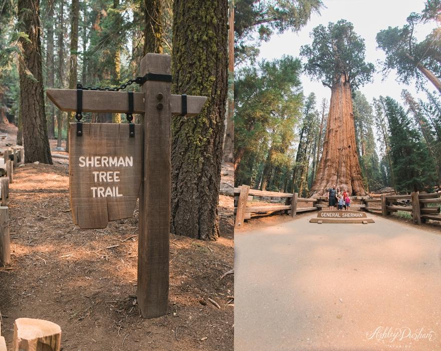 sequoia rv trip summer 2015_0014