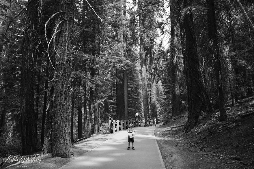 sequoia rv trip summer 2015_0022