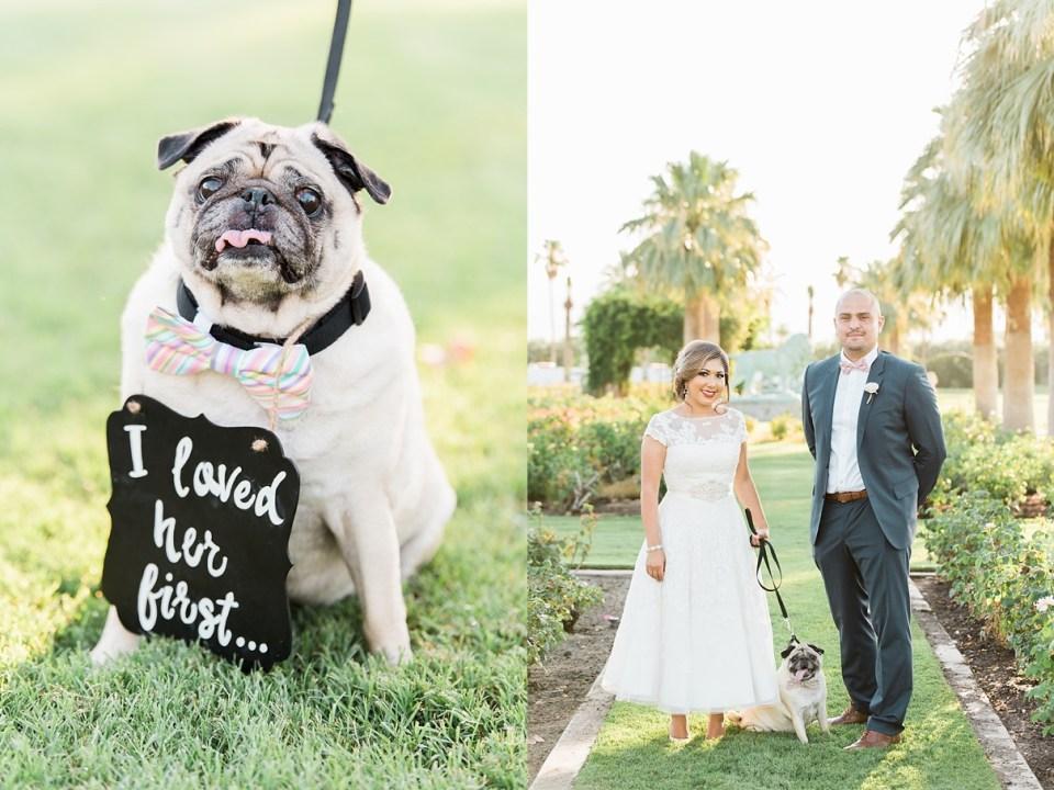 indio wedding photography, empire polo ground wedding, indio polo wedding, tack room indio, indio wedding venue, indio wedding photographer, ring bearer dog, dog at wedding, wedding dogs