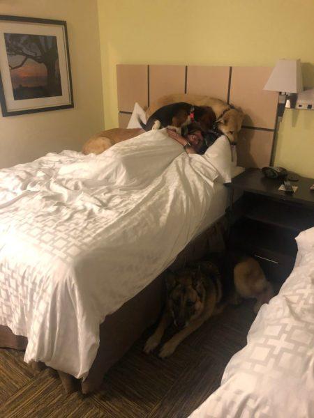 hotel stays with dogs