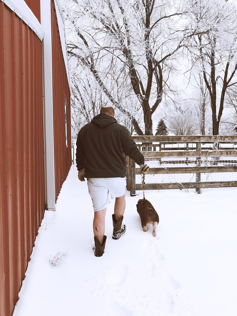 pig walking on a leash in the snow
