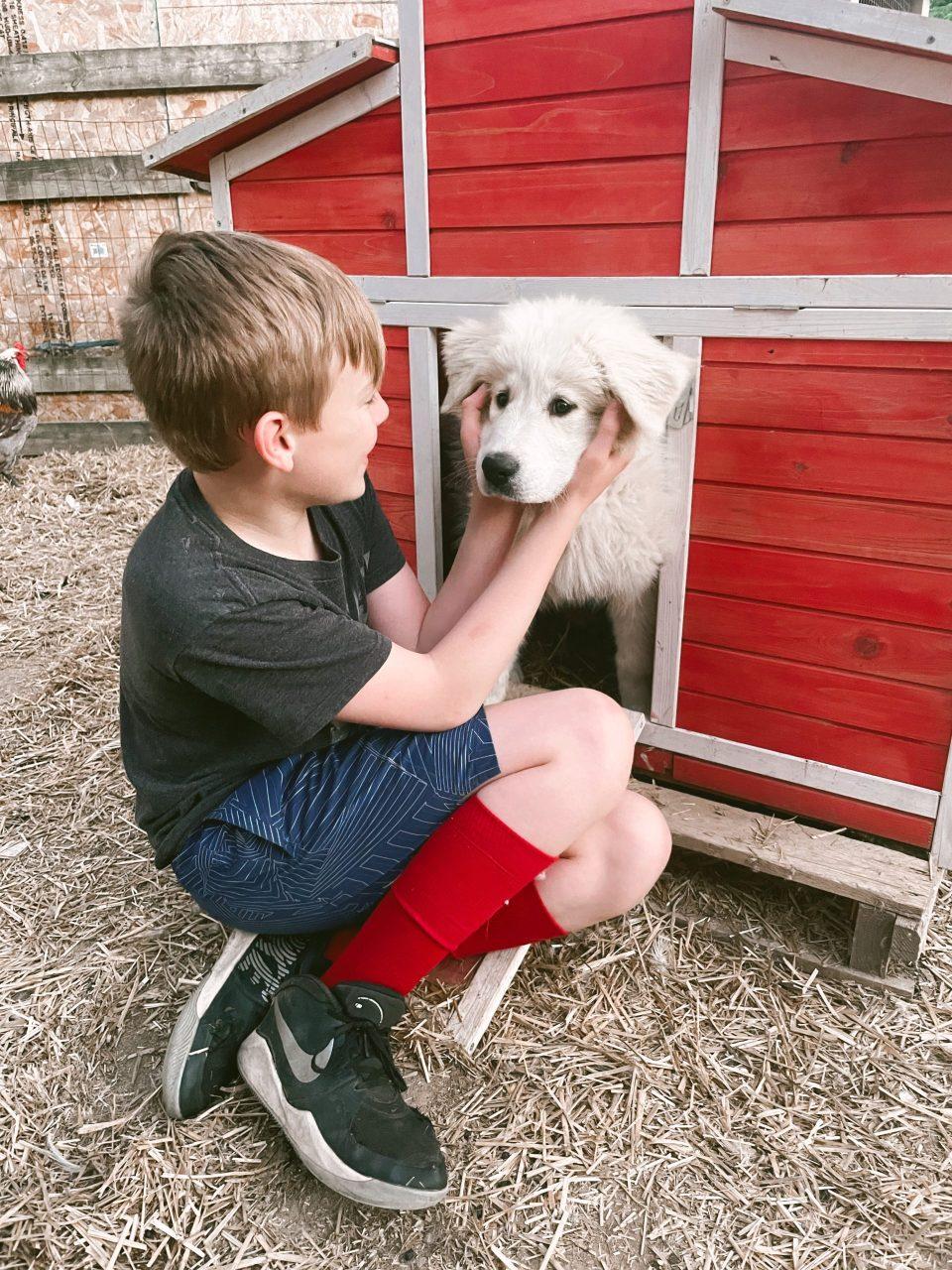 farm dog in a hen house