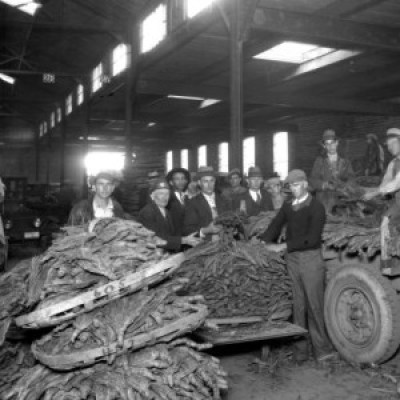 Unloading tobacco, B. B. Saunders Tobacco Warehouse, Asheville, 1930s [?]. Ewart M. Ball Collection, Special Collections, UNCA Library.