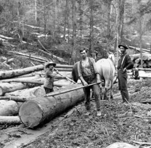 Clearcutting forests in Pennsylvania in teh 1880s. Courtesy of Pennsylvania State Archives.