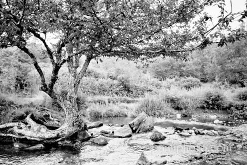 Graveyard Fields Tree