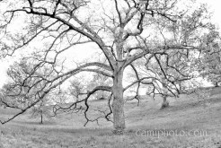 Favorite tree - Biltmore Estate