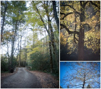 Fall colors at Cataloochee Valley.