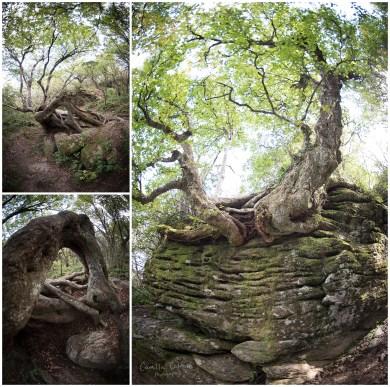 craggy_pinnacle_trail_0015