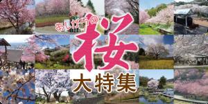 桜大特集バナー_4