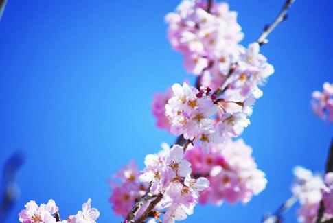 春めきの香りを愉しもう