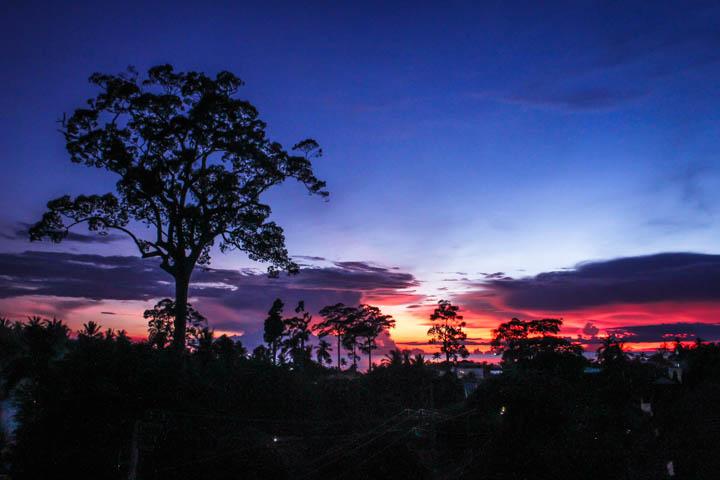 Koh_tao_sunset_tree